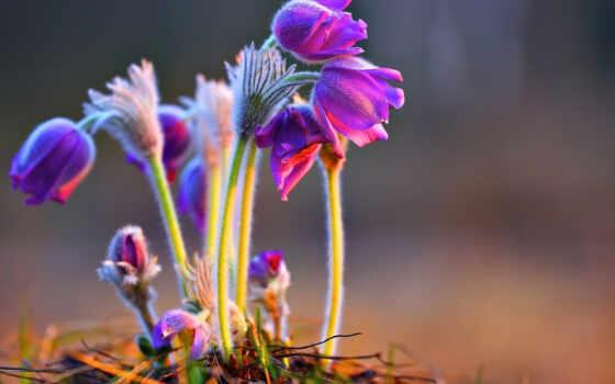 хороший, cvety, утро, till, ночь, new