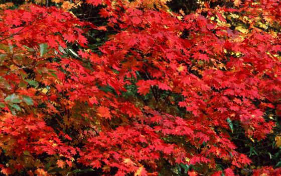 autumn, прекрасных