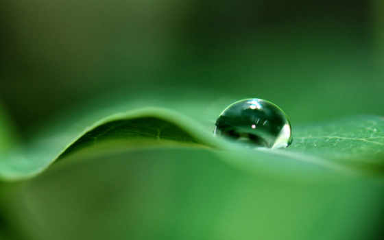 drop, image, leaf, nature, download, росы, android, зеленом, листке, капелька,