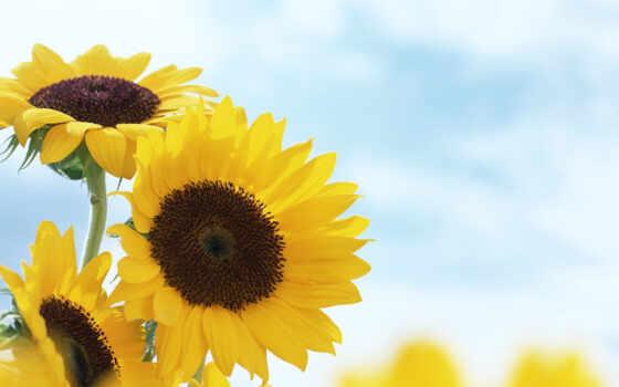summer, цветы, fondo