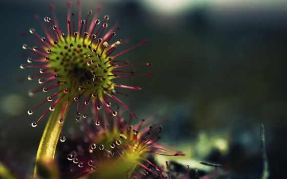 цветы, часть, макро