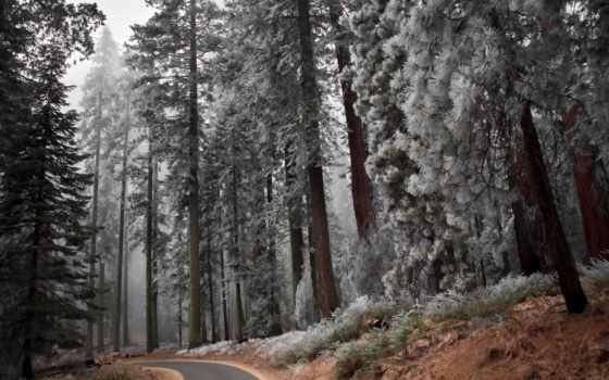 дорога, landscape, лес