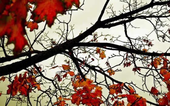 новости, планшетный, full, daler, trees, дневник, природа, клена, листьями, коды,