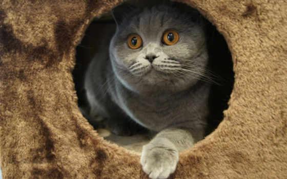 серый, игривый, кот