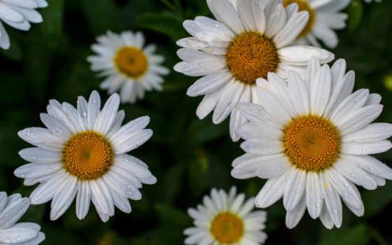 Цветы 20049