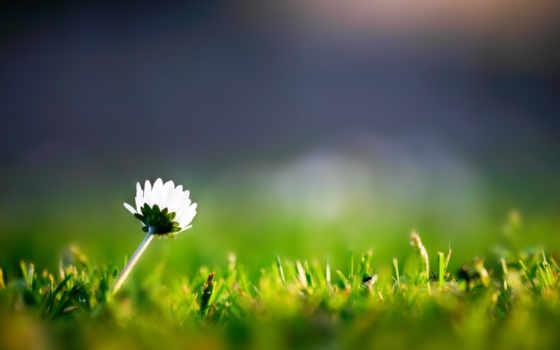 цветок, трава
