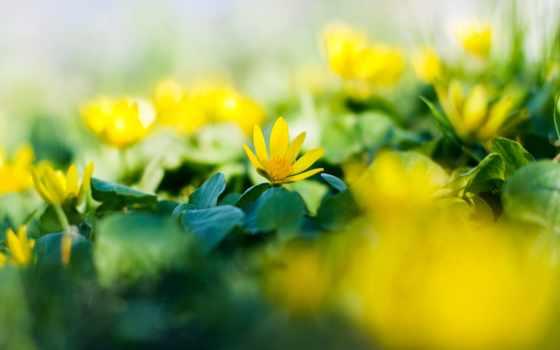 spring, garden