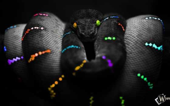 snake, цветная, wpapers