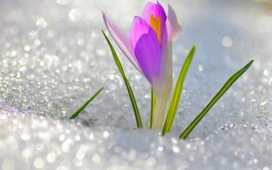 пахнет, весной, марта
