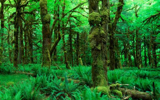 лес, зелёный, trees, природа, листва, rabstol, лесные, мох, лесу,