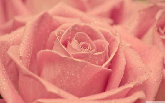 love, заставки, красивые, любовные, всех, влюбленных, валентинки, свадебные,