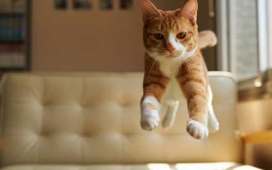 кот, flying, cats, существо, спина, called,
