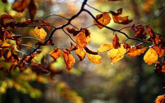 осень, instagram, листва, дерево, branch, оранжевые, ветки, oo,