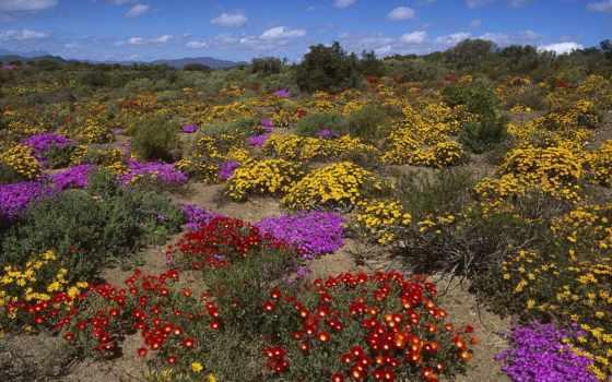 desierto, florido, chile, пустыня, atacama, arias, франческа, ферма, natho