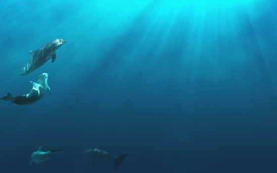 кит, formation, maritime, footage, istock, centre, important