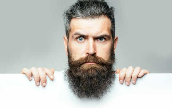 мужчина, борода, собака, borodatyi, germ, тест, волосы, facial, найти, изучение