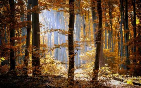 природа, лес Фон № 33660 разрешение 1920x1200
