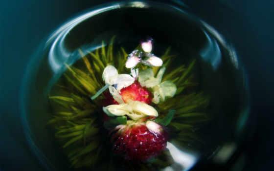 орхидея, цветок, ваза