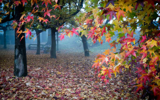 осень, туман, листья