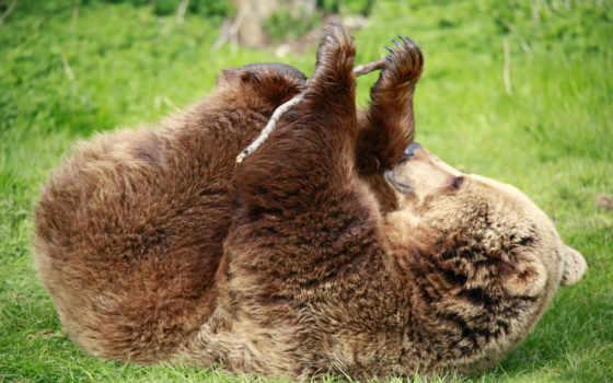 медведь, лапы, зелёная