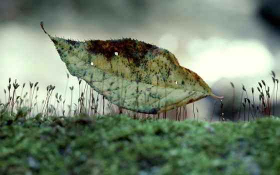 природа, листья, фото