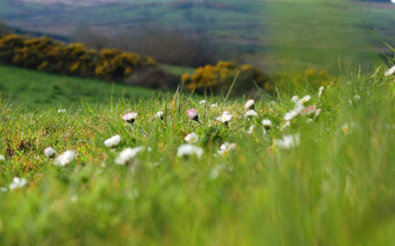 summer, природа, cvety, ромашки, поляна, растения, трава, поле,