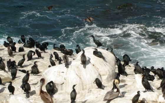 glacier, пингвины, антарктида