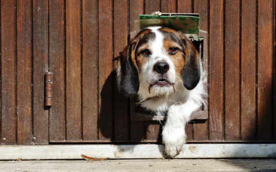 собака, zhivotnye, высокого, красивые, peep, качества, приколы,