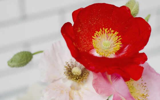 цветы, искусственный, гербера, букет, poppy, russian
