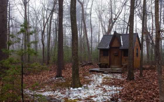 осень, лес, домик