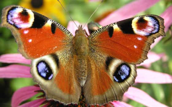butterfly, flying, дек