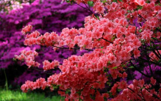 ,кусты,цветы,яркие,красные,