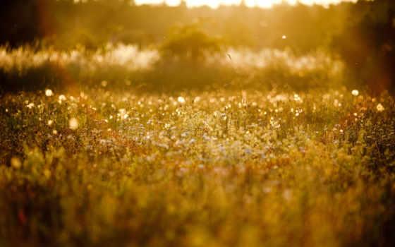 трава, природа, зарегистрируйте