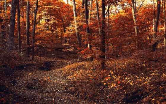 тропинка, лес, осень