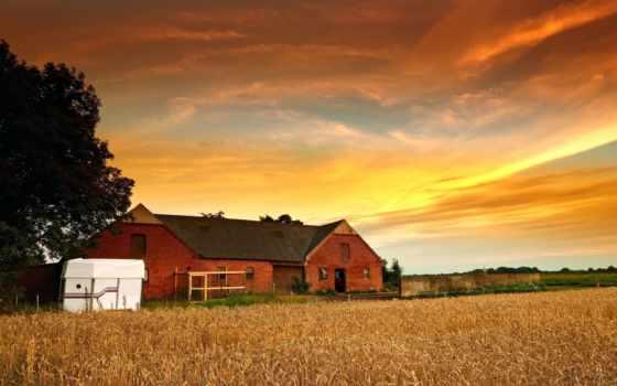 домик, house, trees, природа, растение, пшеница, rye, дерево, листва,