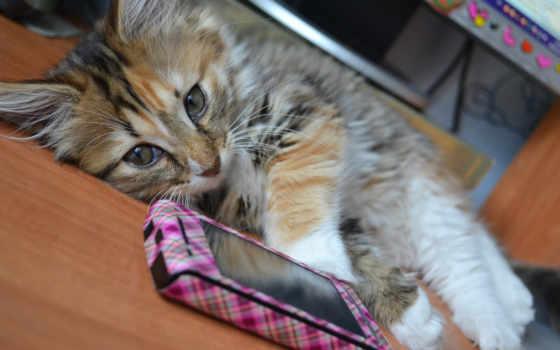 телефон, котенок, ложь, кот,