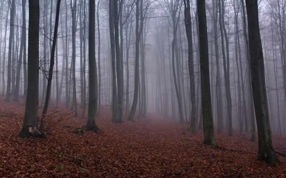 осень, лес, красивый, тумане,