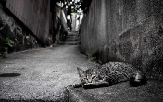 gato, calle, fondos, pantalla, una, con, animalia, asfalto,