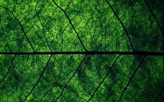 макро, зелёный, листва, зеленые, дерево, заяц, лист, зеленого, листа,