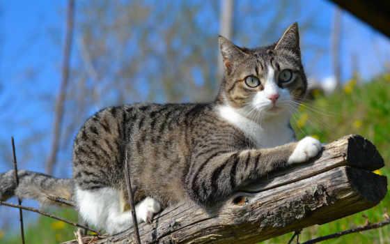кот, природа, log