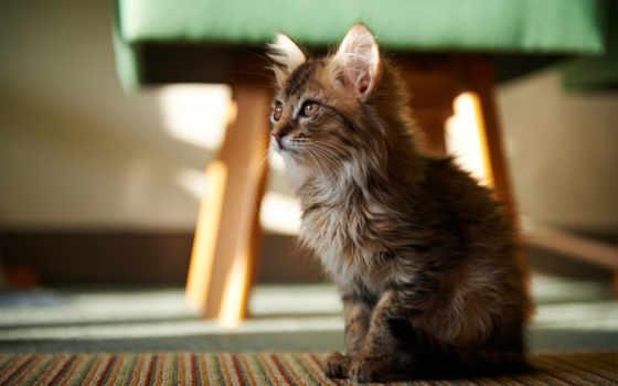 маленький, котик