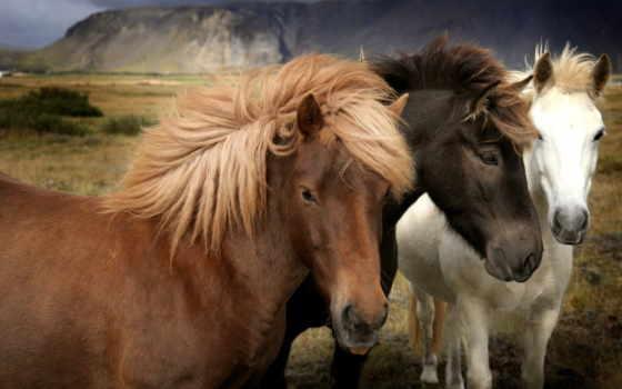 чтобы, лошади, зарегистрируйтесь