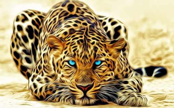 леопард, морда, глаза, color, взгляд, ус, хищник,
