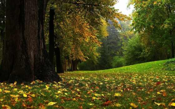осень, природа, park, листва, высоком, трава,