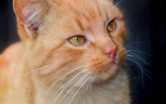gato, fondos, pantalla