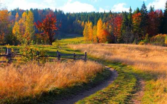 осень, золотая, пейзажи -, природа, осени, фотографий, листва, дорога, умирает, time, опавшие,