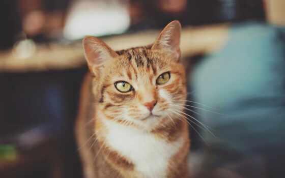 кот, глаз, bir, зелёный, усы