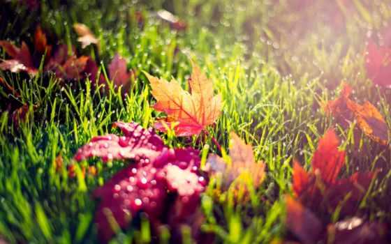 листья, желтые