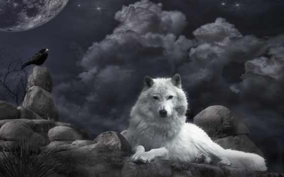 волк, free, awesome