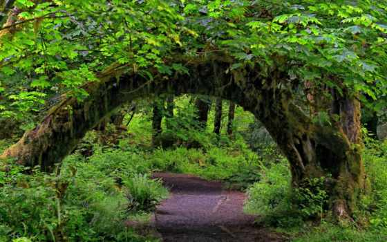 erdő, háttérképek, háttérkép, you, hoh, washington, tomb,